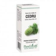 Extract din mladite de cedru - Cedrus Libani MG=D1 (50 ml), Plantextrakt