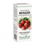 Extract din mladite de merisor - Vaccinium Vitis Idaea MG=D1 (50 ml), Plantextrakt