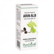 Extract din muguri de arin alb - Alnus Incana MG=D1 (50 ml), Plantextrakt