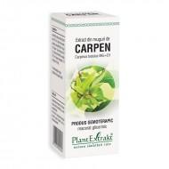 Extract din muguri de carpen - Carpinus Betulus MG=D1 (50 ml), Plantextrakt