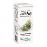 Extract din muguri de jneapan - Pinus Montana MG=D1 (50 ml), Plantextrakt
