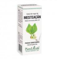 Extract din muguri de mesteacan - Betula Verrucosa MG=D1 (50 ml), Plantextrakt