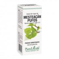 Extract din muguri de mesteacan pufos - Betula Pubescens (50 ml), Plantextrakt